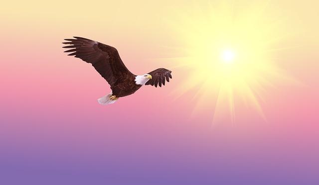 bald-eagle-521492_640